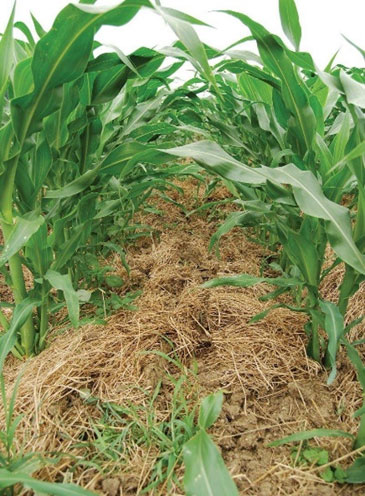 Balanced-and-integrated-use-of-fertilizers-and-micronutrients