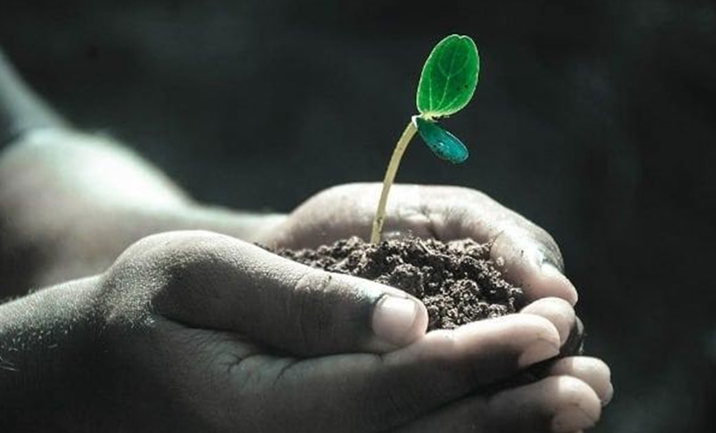 Soil-health-and-nutrient-management-for-better-crop-yields-thumb